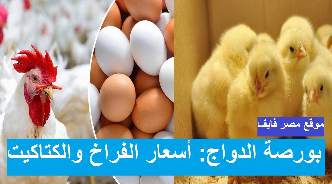 بورصة الدواجن يوم 2 رمضان.. أسعار الدواجن اليوم الأربعاء 14 أبريل 2021 وسعر الفراخ وسعر الكتكوت الابيض