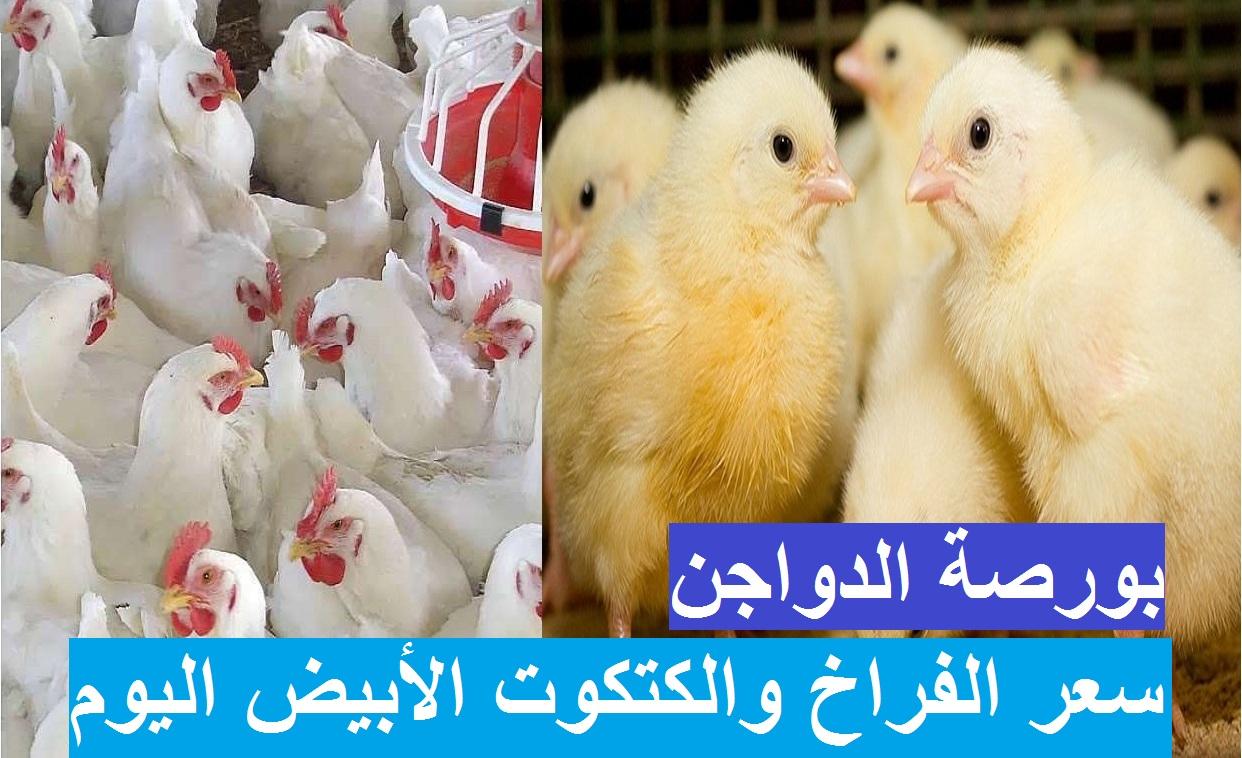 بورصة الدواجن.. زيادات جديدة تضرب سعر الفراخ البيضاء اليوم 9 أبريل 2021 وانخفاض سعر الكتكوت الابيض الآن