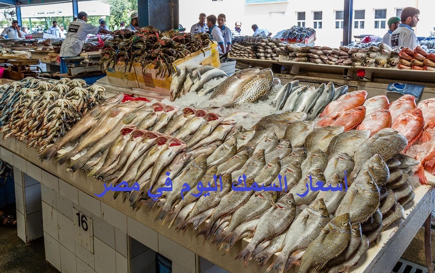 أسعار السمك اليوم الأربعاء 28 أبريل 2021.. بوري وبلطي وقراميط وقرش وجمبري 3