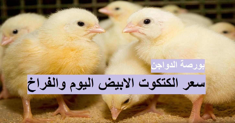 بورصة الدواجن اليوم الأحد 18 أبريل 2021.. أسعار الفراخ البيضاء والساسو والكتكوت الابيض 6