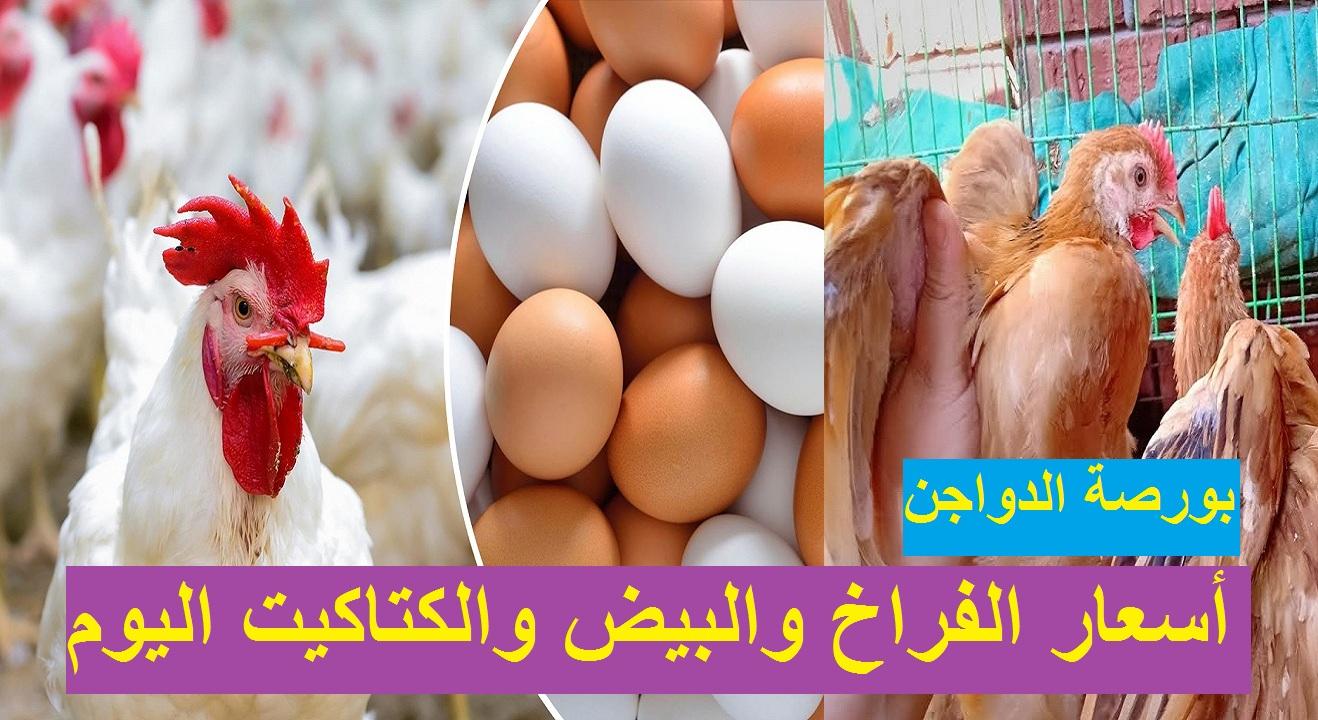 بورصة الدواجن.. سعر الفراخ اليوم الأربعاء 21 أبريل 2021 بيضاء وساسو وأسعار الكتاكيت والبيض 33