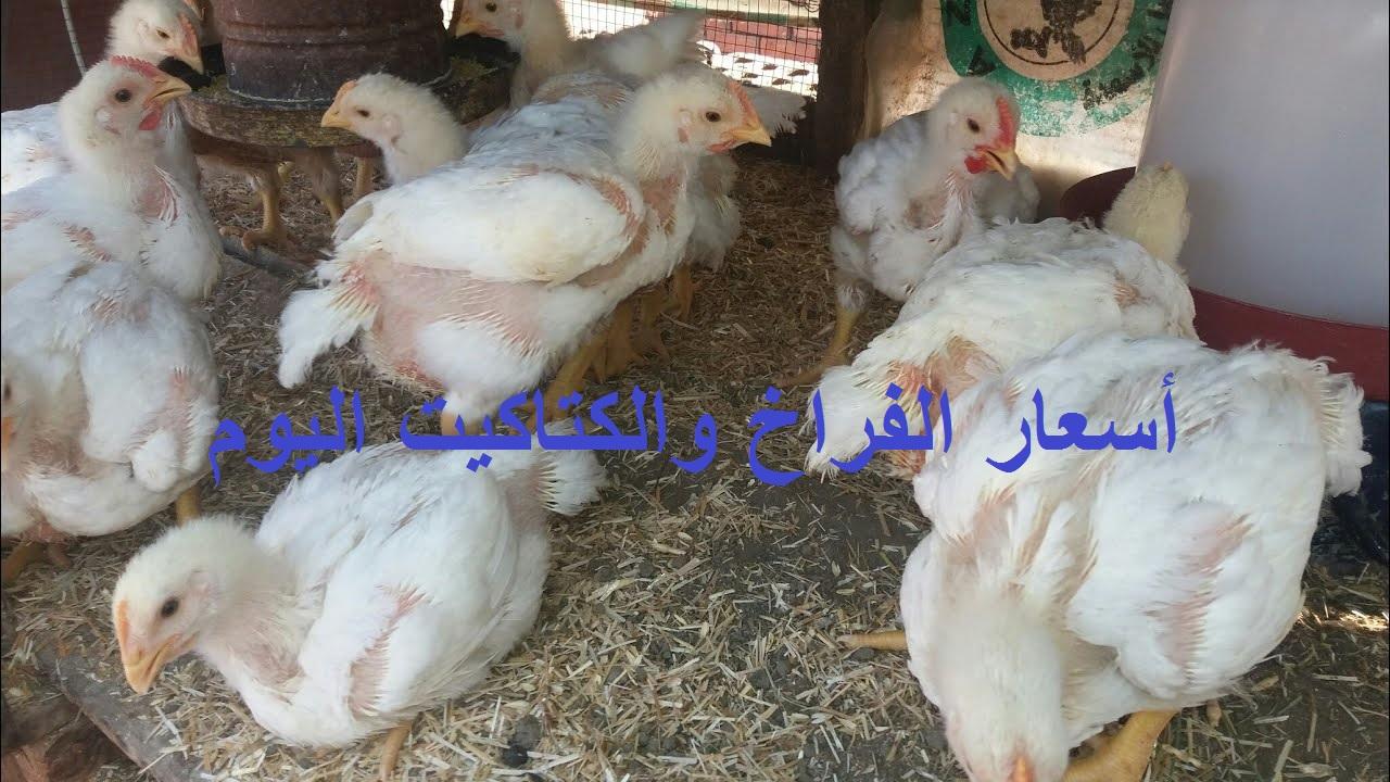 بورصة الدواجن.. أسعار الفراخ البيضاء والساسو والكتاكيت اليوم الجمعة 4 يونيو 2