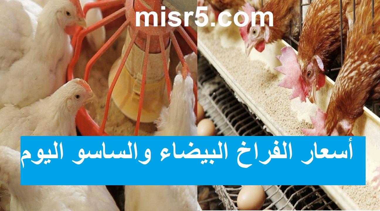 أسعار بورصة الدواجن.. سعر الفراخ اليوم الأربعاء 16 يونيو 2021 في البورصة الرئيسية