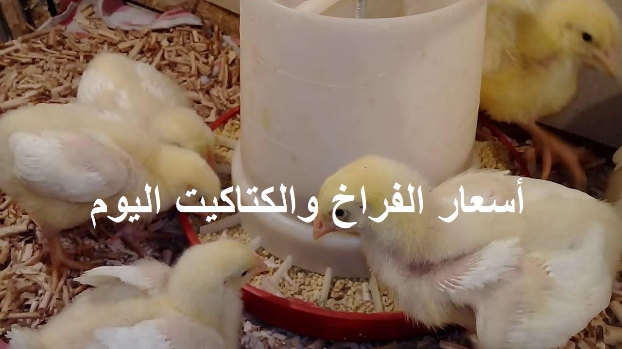 بورصة الدواجن.. أسعار الفراخ البيضاء والساسو والكتاكيت اليوم الجمعة 4 يونيو 3