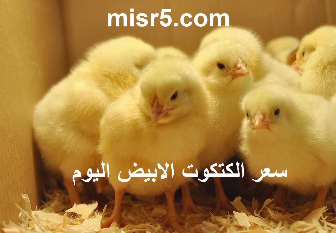 بورصة الدواجن الجمعة.. سعر الكتكوت الابيض اليوم 4 يونيو 2021