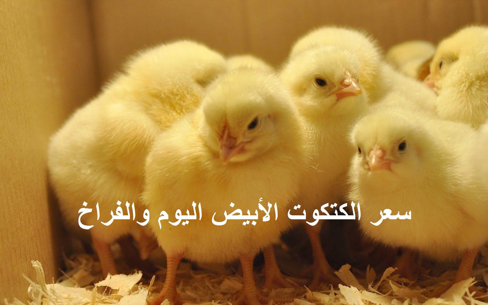 سعر الفراخ اليوم الخميس 27 مايو في بورصة الدواجن الرئيسية 5