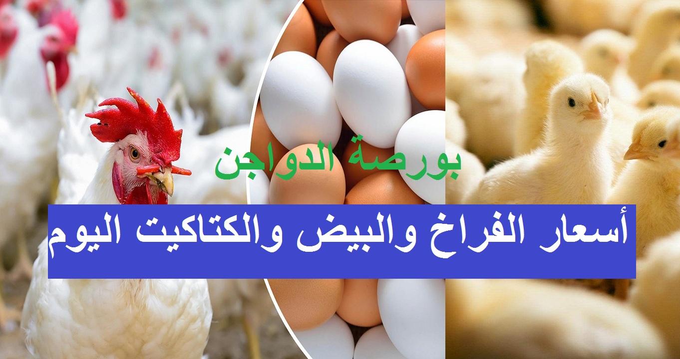 سعر بورصة الدواجن اليوم الخميس 16 سبتمبر وسعر الفراخ والكتكوت الأبيض