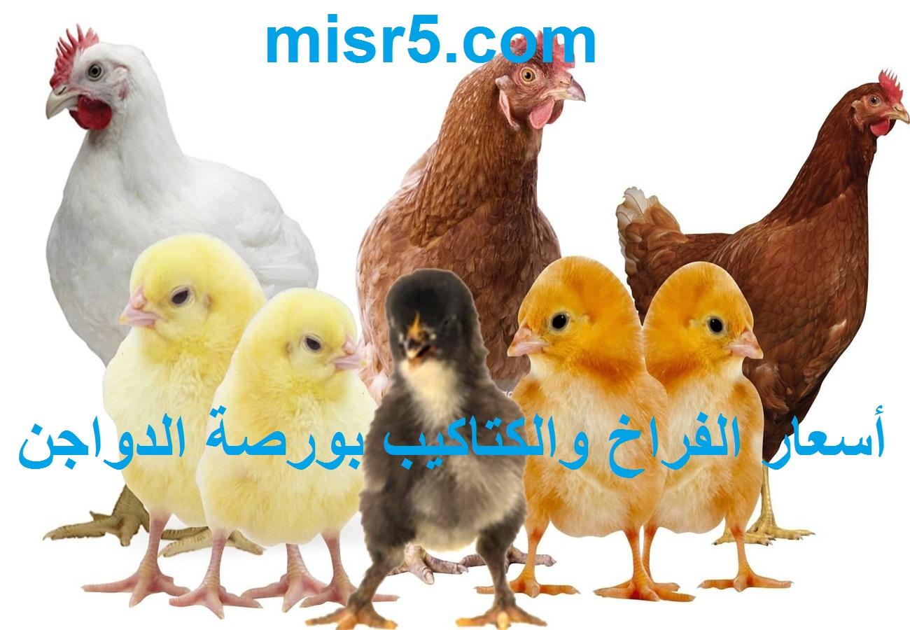 أسعار الفراخ اليوم الثلاثاء 15 يونيو 2021 في بورصة الدواجن وأسعار البيض والكتاكيت اليوم