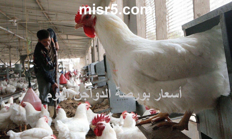 بورصة الدواجن اليوم الجمعة 30 يوليو.. سعر الفراخ وسعر الكتكوت الأبيض والبيض
