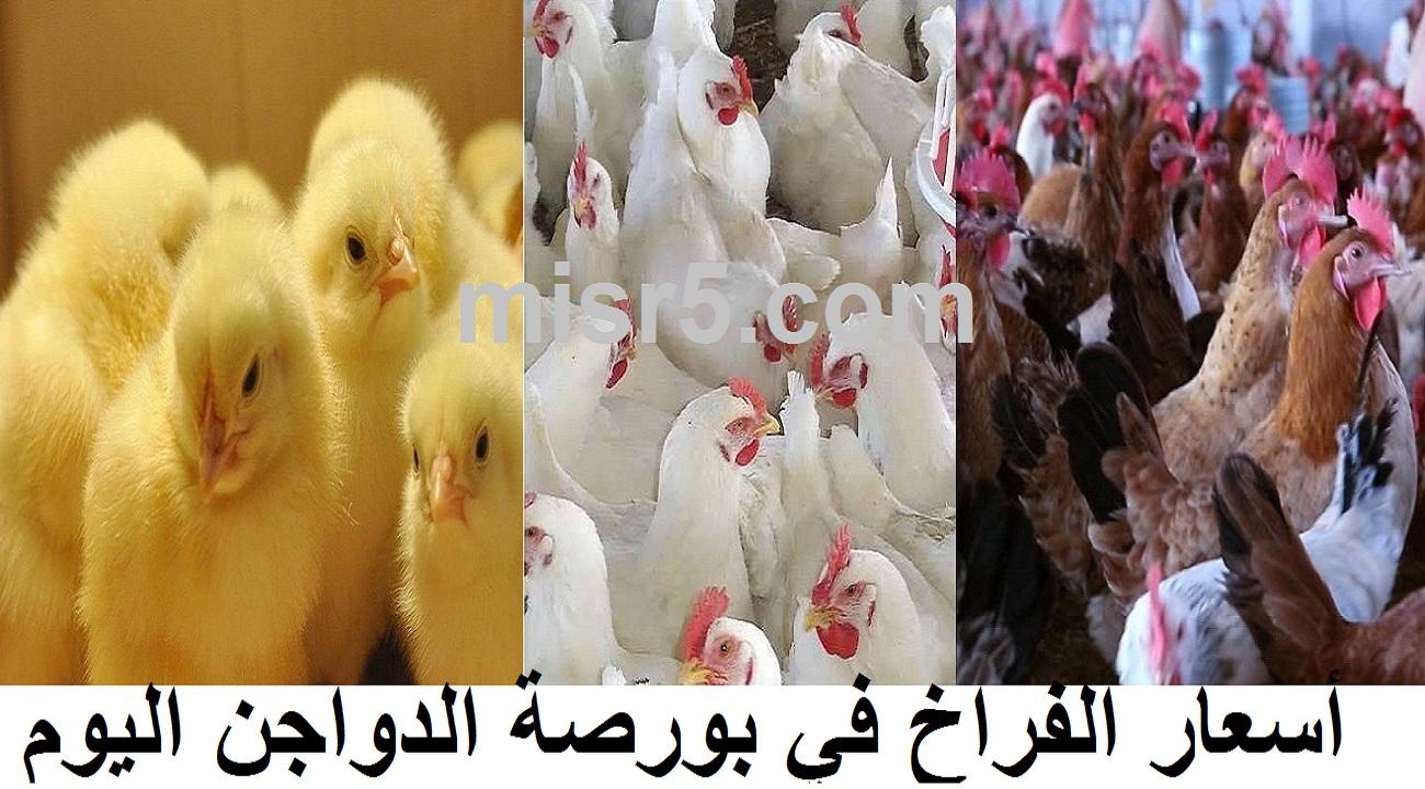 سعر الفراخ اليوم الإثنين 2 أغسطس في بورصة الدواجن وسعر الكتكوت الأبيض والبيض