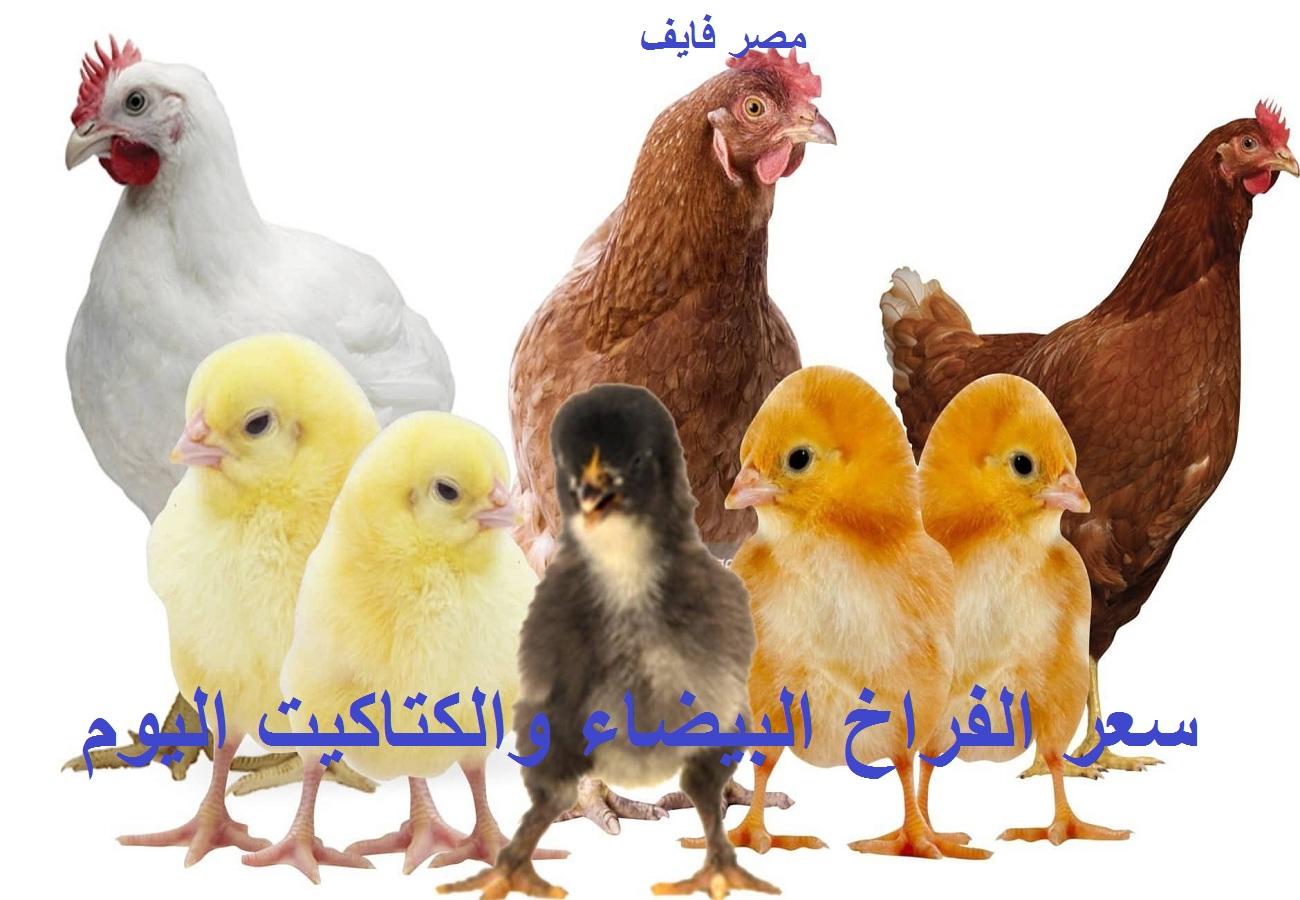 أسعار الدواجن 7 يوليو 2021.. ارتفاع سعر الفراخ اليوم الأربعاء وأسعار البيض والكتكوت الأبيض 2