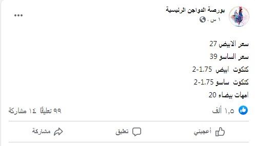 سعر الكتكوت الأبيض اليوم السبت 31 يوليو 2021 وأسعار الفراخ 9