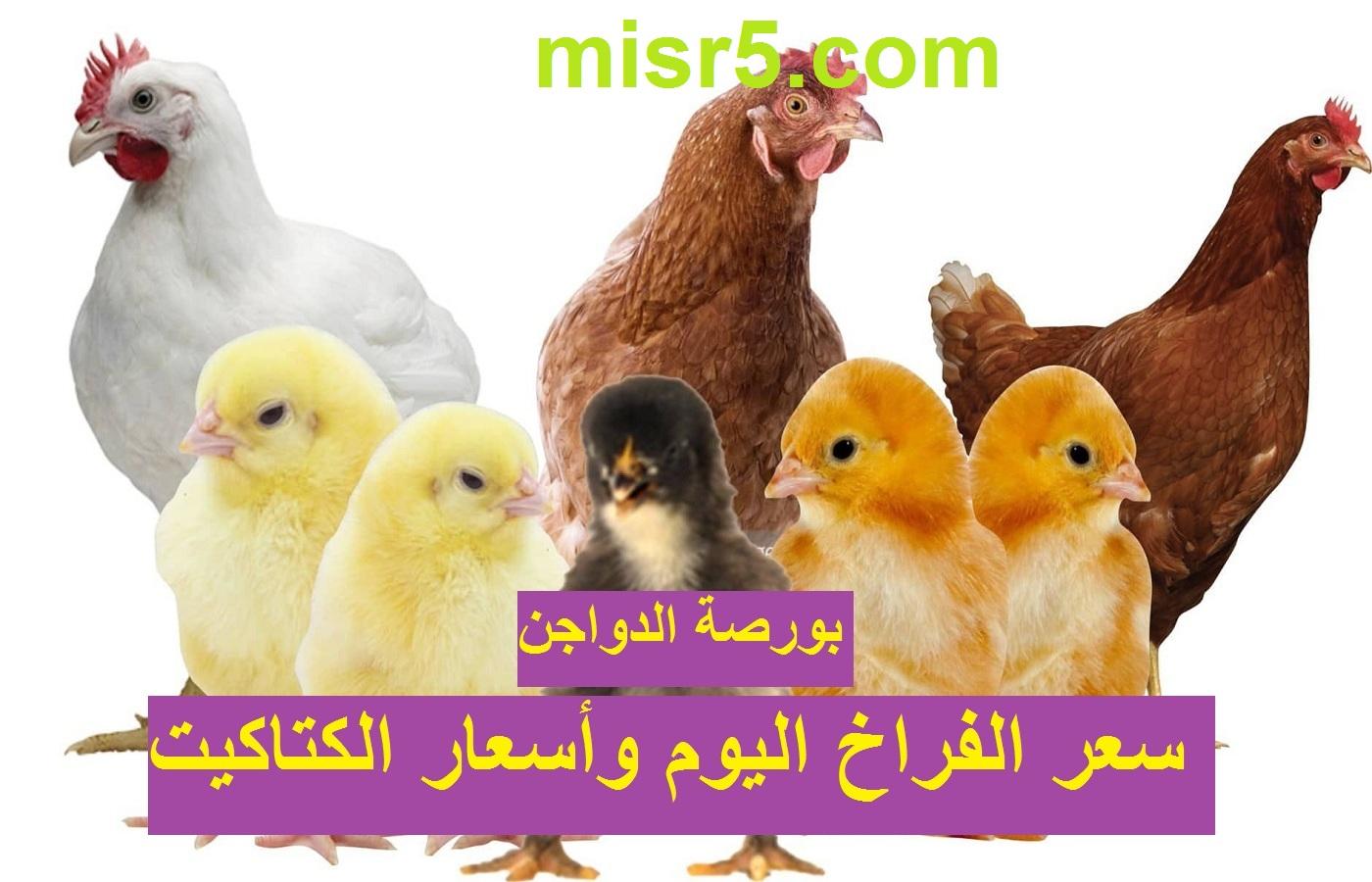 بـ 42 جنيه انهارده.. سعر الفراخ اليوم الجمعة 9 يوليو بيضاء وساسو وأسعار البيض والكتاكيت