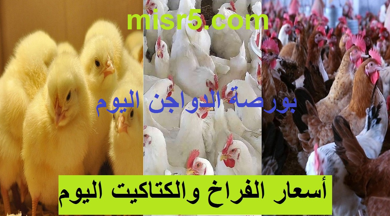 بـ 42 جنيه انهارده.. سعر الفراخ اليوم الجمعة 9 يوليو بيضاء وساسو وأسعار البيض والكتاكيت 4