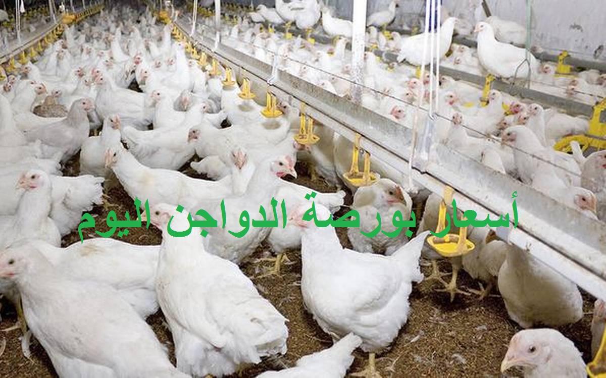 بورصة الدواجن اليوم الجمعة 30 يوليو.. سعر الفراخ وسعر الكتكوت الأبيض والبيض 2