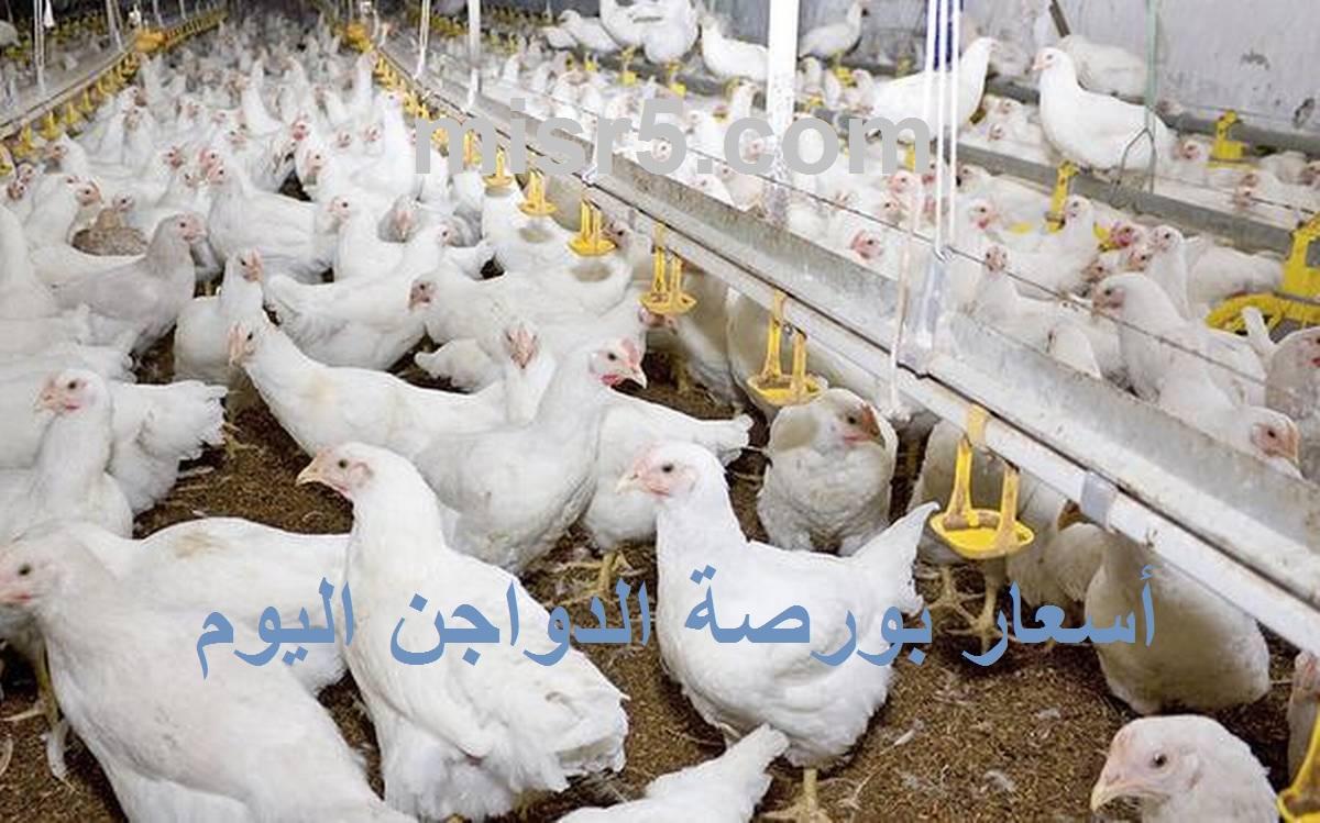 سعر بورصة الدواجن اليوم الخميس 16 سبتمبر وسعر الفراخ والكتكوت الأبيض 9