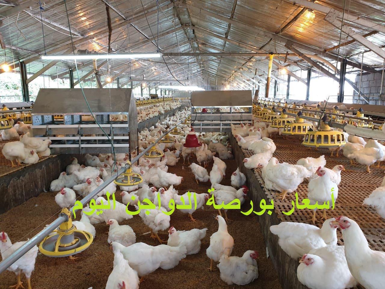 Precio del pollo hoy