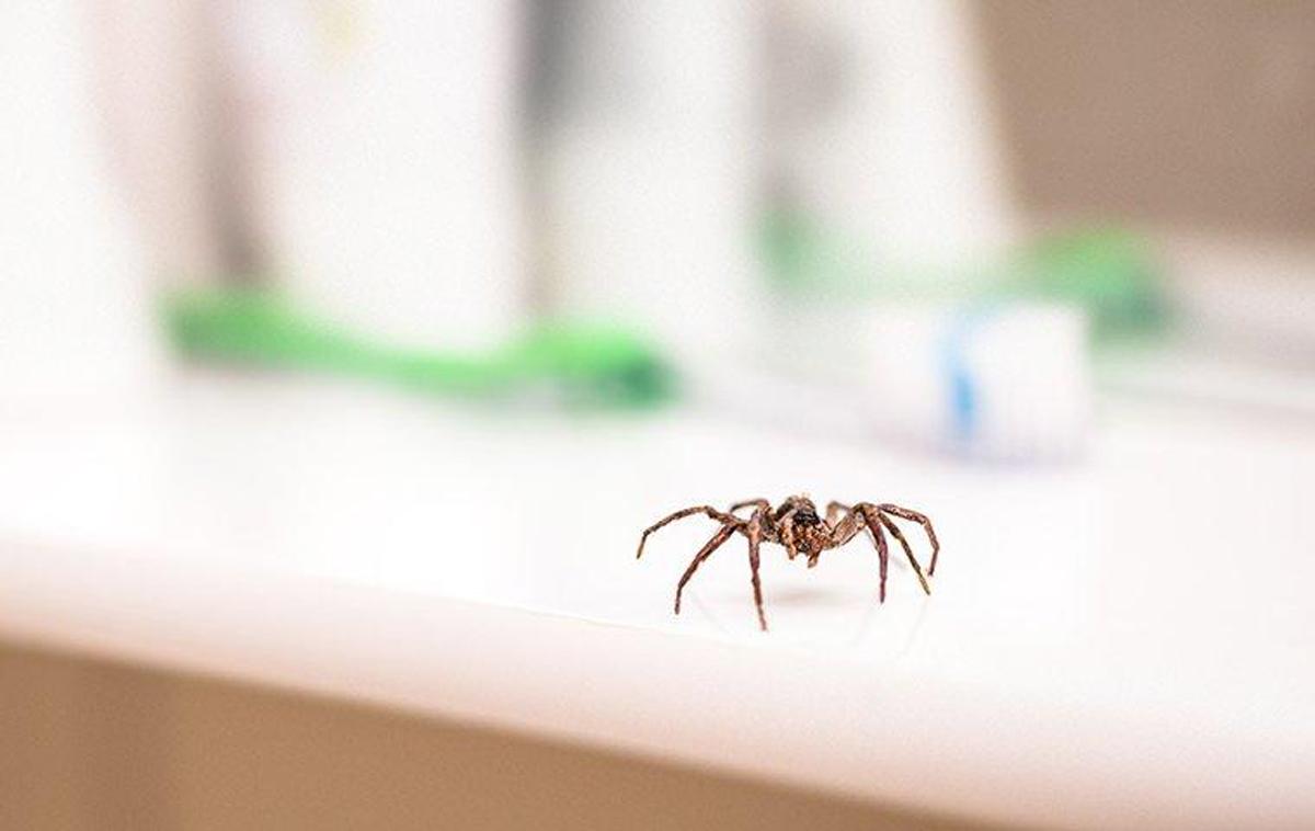 كيفية التخلص من العناكب بطريقة سهلة ومتوفرة في منزلك