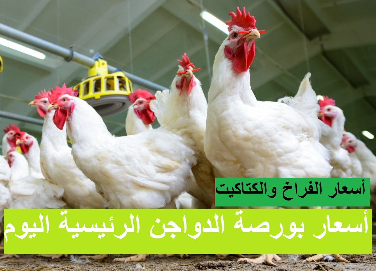 أسعار بورصة الدواجن اليوم الإثنين 13 سبتمبر وسعر الفراخ اليوم والكتاكيت