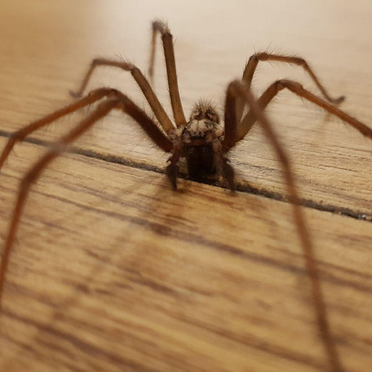 كيفية التخلص من العناكب بطريقة سهلة ومتوفرة في منزلك 1