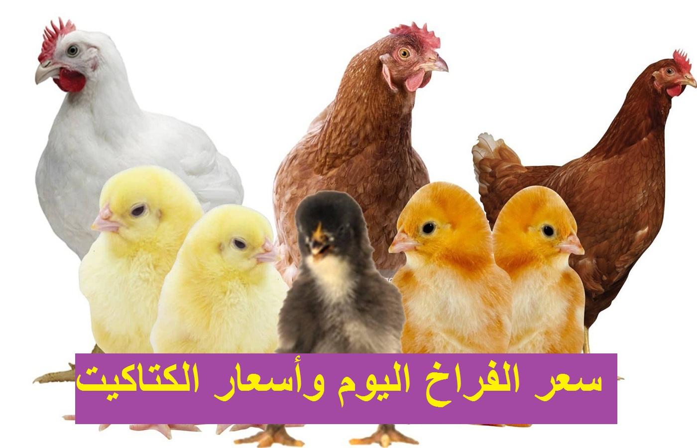 سعر الفراخ اليوم في بورصة الدواجن وسعر الكتكوت الأبيض وأسعار البيض 3