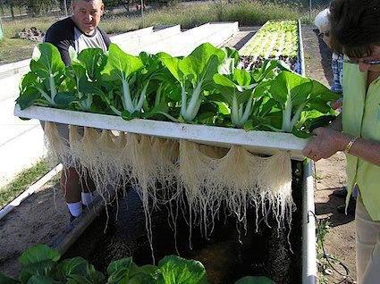 مبادرة لزراعة اسطح المنازل والمدارس بدون تربة
